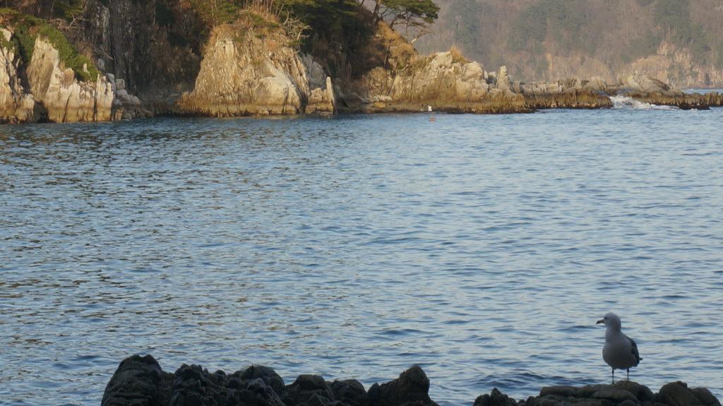 ウミネコと海